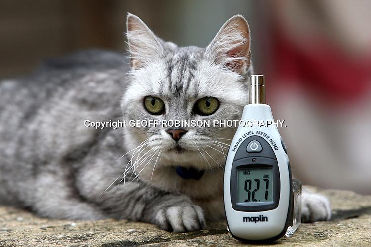 cat purring loud