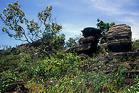 Rocks with cerrado vegetation (wooded savanna) in Parque Estadual (State Park) dos Pireneus, Brazilian Highlands, Goiás, Brazil