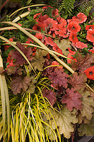 Container of colorful foliage and flowers, Heuchera 'Ginger Peach', Petunia 'Happy Peach', Carex 'Everillo'