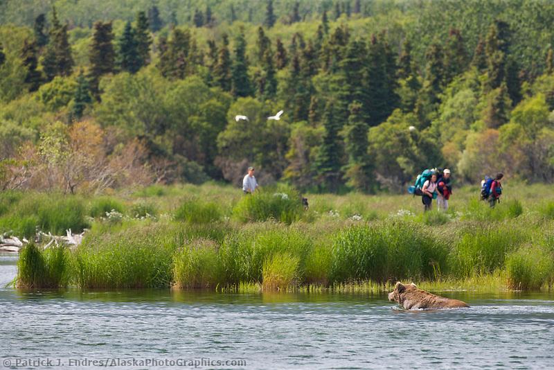 Tourists view bears along the Brooks River, Brooks Lodge, Katmai National Park, Alaska