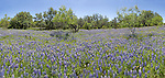 Bluebonnet Panorama, Llano County