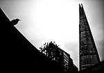 Small bird silhouetted against sky with The Shard in background