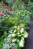 Hosta Great Expectations, Rudbeckia, Monarda Cambridge Scarlet, Sedum Frosty Morn, Hakonechloa Allgold, Kolkwitzia Dreamcatcher, Kale Lacinato vegetable, garden bed view scenic, combination, with black mulched path walkway