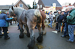 Foto: VidiPhoto<br /> <br /> HEDEL - De bekende paardenmarkt in Hedel in de Bommelerwaard had maandag te maken met een absoluut dieptepunt in de historie. Er werden slechts 1136 paarden en pony's aangevoerd, de helft van wat er normaal gesproken staat. Marktmeester Van den Anker sprak van een &quot;bizar laag aantal.&quot; De oorzaak is volgens hem dat er minder paarden gefokt worden. Gevolg is wel meer handel en iets hogere prijzen. Daarnaast constateerden dierenartsen en controleurs van de Nederlandse Voedsel- en Waren Autoriteit (NVWA) en Eyes on Animals een agressieve sfeer onder de handelaren. Om die reden besloot de organisatie enkele paarden met gecoupeerde staarten niet te verwijderen. De drie grootste paardenmarkten van ons land, Els, Hedel en Zuid-Laren, hebben enkele jaren geleden besloten paarden met afgesneden staarten niet meer toe te laten. Op verzoek van Eyes on Animals en NVWA wilde de marktorganisatie deze paarden maandag in Hedel te verwijderen. Handelaren weigerden echter op te stappen. Om escalatie te voorkomen werd er verder niet ingegrepen. Foto: Een gecoupeerd trekpaard.