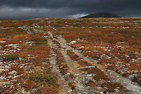 Mountain path,Dovre national park,Norway