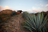 &quot;Full Moon Over Agave&quot;- This sunset, moon and agave plant were photographed at Parador San Sebastian, Mexico.