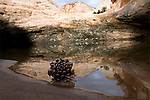 A pine cone sits on the edge of a pool surrounded by a reflection of swirling Navajo Sandstone.