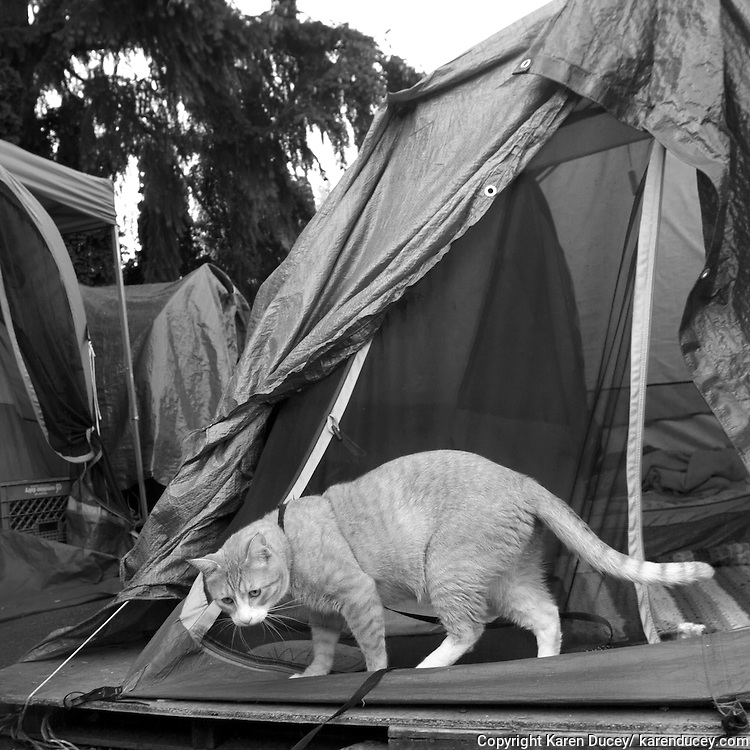 Butters is one of three cats and six dogs who live in Tent City 3 in Seattle, Wash. The homeless encampment is one of the few places people with pets can live together.