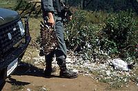 Operazione Adorno. Servizio di prevenzione e repressione del bracconaggio ai danni del falco Pecchiaiolo ( chiamato anche Adorno ) nella zona di Reggio Calabria, dall'Aspromonte al litorale costiero. Gli uccelli migratori, in primavera, attraversano lo stretto di Messina, i bracconieri li cacciano a causa di credenze popolari. Ritrovamento dei resti di un falco ucciso..Adorno operation. Service of prevention and repression of poaching against the falcon Pecchiaiolo ( also called Adorno ) in the area of Reggio Calabria, from Aspromonte to coast. .Migratory birds in spring, crossing the Strait of Messina, the poachers hunt them because of popular beliefs. Discovery of the remains of a hawk killed.....