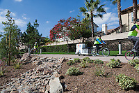 The Orange Coast College Food Riders student club riding on the Harbor Blvd. class I bike path with palm trees behind them and landscaping with rocks in front of them.  The OCC Food Riders gather unsold food from the OCC Cafeteria twice a week and bike it to food shelters as donations.