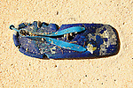 Plastic shoe on the beach at Panasia Island.Panasia is a spectacular island of uplifted coral reef making jagged limestone cliffs in  the Louisiade Archipelago..The Louisiade Archipelago is a string of ten larger volcanic islands frequently fringed by coral reefs, and 90 smaller coral islands located 200 km southeast of New Guinea, stretching over more than 160 km and spread over an ocean area of 26,000 km  between the Solomon Sea to the north and the Coral Sea to the south. The aggregate land area of the islands is about 1,790 kmu178  (690 square miles), with Vanatinai (formerly Sudest or Tagula as named by European claimants on Western maps) being the largest..Sideia Island and Basilaki Island lie closest to New Guinea, while Misima, Vanatinai, and Rossel islands lie further east..The archipelago is divided into the Local Level Government (LLG) areas Louisiade Rural (western part, with Misima), and Yaleyamba (western part, with Rossell and Tagula islands. The LLG areas are part of Samarai-Murua District district of Milne Bay. The seat of the Louisiade Rural LLG is Bwagaoia on Misima Island, the population center of the archipelago. .The Louisiade Archipalego is part of the Milne Bay province of Papua New Guinea..It lies between approximately 10 degrees south and 11.5 degrees south, and 151 degrees east and 154 degrees east. It is an area of Islands, reefs and cays some 200 nm long and 50 nm wide, stretching from the south east tip of mainland Papua New Guinea in a east south east direction..Panasia Island.Panasia is a spectacular island of uplifted coral reef making jagged limestone cliffs in the  Louisiade Archipelago..The Louisiade Archipelago is a string of ten larger volcanic islands frequently fringed by coral reefs, and 90 smaller coral islands located 200 km southeast of New Guinea, stretching over more than 160 km and spread over an ocean area of 26,000 km  between the Solomon Sea to the north and the Coral Sea to the south. The aggregate land area of the