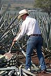 Tequila, Mexico Photos