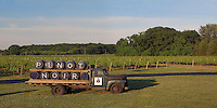 Castello di Borghese Vineyard, Cutchogue, New York, Long Island, Truck, Pinot Noir, panorama
