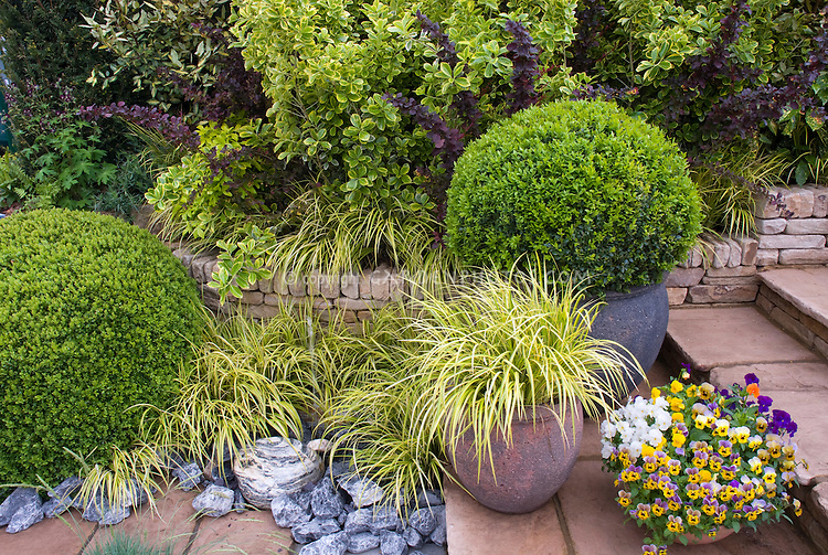 Container plants perennials shrubs flowers grasses for Ornamental grass bed design