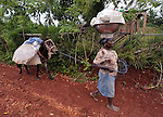 A woman pulls her donkey along a road in Mizak, a small village in the south of Haiti.