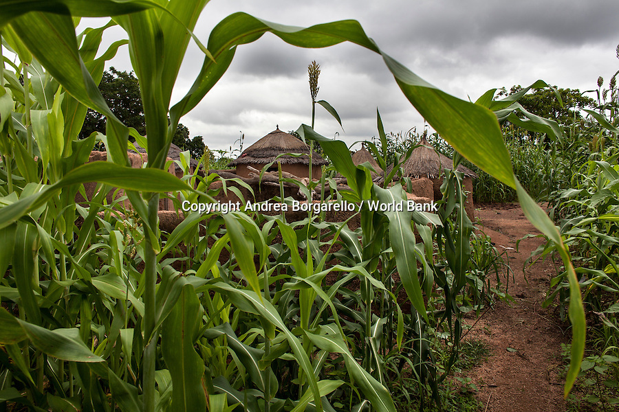 Burkina Faso, Centre-East. Farmer prepares sorghum and maize seedlings given by the World Bank funded Programme National Gestion des Terroirs.