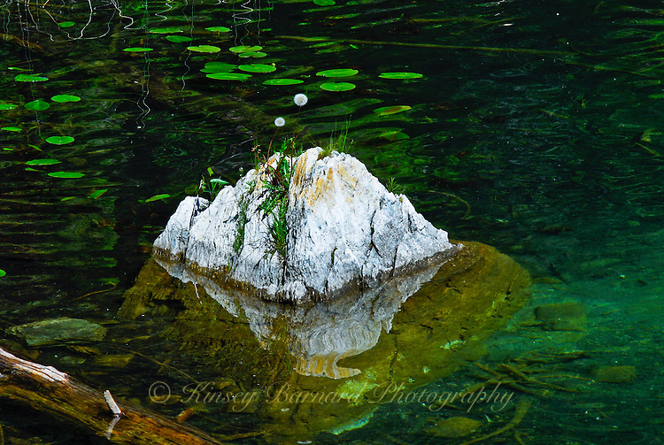 &quot;GONE TO SEED&quot;<br />