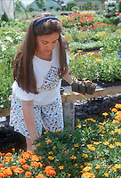 Woman person female human choosing buying annual flowers plants marigolds at garden center nursery, spring summer. Model released.