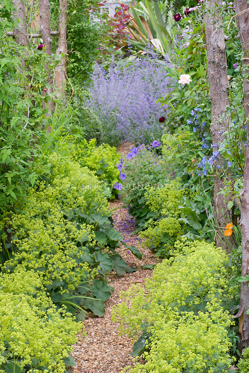 Gravel path with Alchemilla mollis in garden use