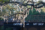 Spanish Moss, Tillandsia usneoides, an air-feeding plant or epiphyte, on trees at Bellingrath Gardens near Moblie, Alabama in early spring. It is not a parasite and does not live off the trees upon which it grows, nor is it harmful to the trees.