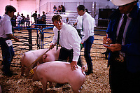 Swine showmanship is a combination of chaos and control....the key being to keep direct eye contact with the judge while at the same time maintaining control of your unruly animal. Photograph from Del Norte County Fair in California.