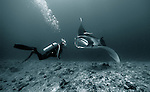 Giant manta ray (Manta birostris) in close proximity to a diver