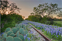 You can walk a long way down these train tracks in Kingsland, Texas. In the spring, just follow the purple and blue of the Texas bluebonnets and enjoy the walk - but watch out for the cactus!