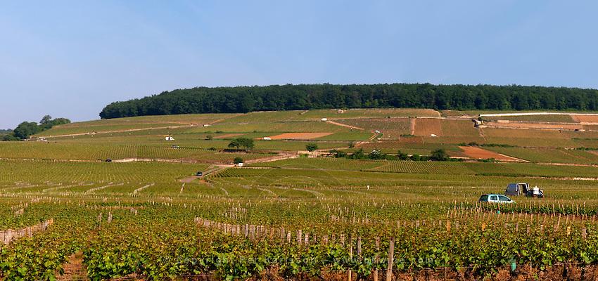vineyard corton hill aloxe-corton cote de beaune burgundy france