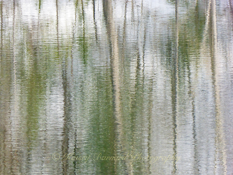&quot;MADISON RIVER REFLECTIONS&quot;<br /> <br /> Snags and tree trunk reflections on the waters of an eddy along the Madison River in Montana. Soft, subtle colors create a beautiful abstract landscape on these waters. ORIGINAL 24 X 36 GALLERY WRAPPED CANVAS SIGNED BY THE ARTIST $2,500. CONTACT FOR AVAILABILITY.