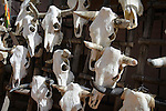 Cow skulls for sale at a gift shop in Santa Fe, New Mexico