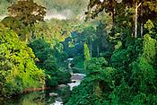 Jungles Portfolio