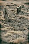 Graves overgrown in churchyard