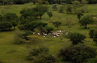A cattle camp in the Boma-Jonglei Landscape is also home to some of the most spectacular and important wildlife populations, including  perhaps the largest wildlife migration in the world. An annual migration of  antelope colled the white-eared kob may rival the famous wildebeest migration of the Serengeti. (PHOTO: MIGUEL JUAREZ LUGO)