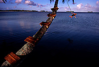 """The largest purchase to date for the Nature Conservancy is the Palmyra an atoll situated about 300 miles north of the equator.  The cook at the NC temporary camp uses a rope swing for recreation. Palmyra has five times as many coral species as the Florida Keys and three times as many as Hawaii.  It is home to the world's largest invertebrate, the rare coconut crab, and a population of red-footed booby birds second only to that of the Galapagos.  It is the last marine wilderness area left in the U.S. tropics and is home to the last remaining stands of Pisonia grandis beach forest in the world.  Palmyra was a US Navy supply base in World War II, the site of a proposed nuclear waste dump, an unsuccessful coconut plantation and of various development schemes.  Palmyra is most famous for the 1974 slaying  of a married couple which became the subject of the best-selling book """"And the Sea Will Tell,"""" by Vincent Bugliosi."""