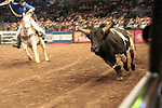 Professional BullRiding(PBR) comes to New York City held at MSG on Jan. 8, 2010