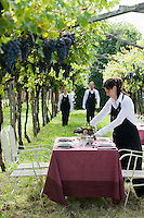 A waitress of the Ristorante Arquade near Verona applies the finishing touches to a laid table placed amongst the vineyards