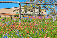 This is the Cowboy Church with a field of bluebonnets and indian paintbrush wildflowers along the road in the Texas Hill Country.