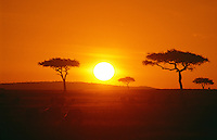The silhouette of acacia trees at sunrise over the plains of Maasai Mara. The Maasai Mara game reserve offers the classic vision of Africa. Long views of large herds grazing on open lands with spotty acacia trees breaking the endless horizon.