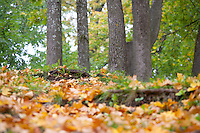 Tree-Trunks and Leaves in Fall