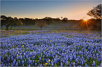 I drove a long way in the dark to find this wonderful field of Texas Bluebonnets - and to capture this scene as the sun first peaked over the distant tree line. The dirt road I drove was full of mud, but it was worth it to witness this morning in the Texas Hill Country