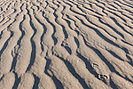 Death Valley National Park, California; kit fox (Vulpes macrotis) footprints in the ripples in the sand on the Mesquite Flat Sand Dunes in early morning sun and shadows