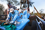 Team of Elephant Population Management Program surgeons, assisted by Dr Mark Stetter, top left, director of animal health at Disney's Animal Kingdom in Florida, perform vasectomy on wild elephant bull, Loxodonta africana, using keyhole surgery.  Private game reserve in Limpopo, South Africa. Dr Stetter came up with concept of wild elephant vasectomies