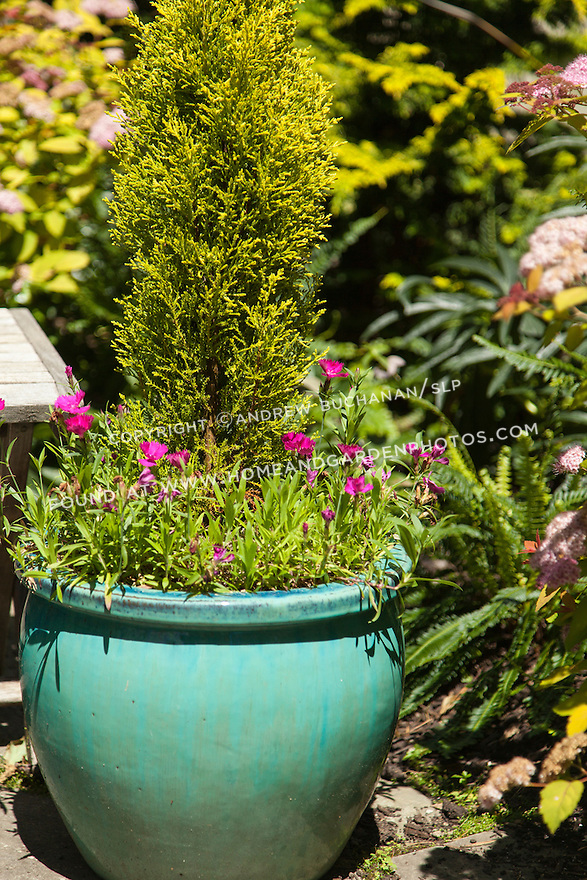 A colorful container with a tall evergreen shrub surrounded by cheerful pink annuals