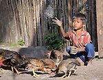 Lea Leen feeds his family's chickens in the Cambodian village of O Kroich, where residents are members of the Kouy indigenous group. The boy's family participates in a rice bank sponsored by the Community Health and Agricultural Development program of the Methodist Mission in Cambodia.