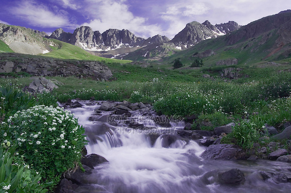 Mountain stream and wildflowers, Heartleaf Bittercress,Cardamine cordifolia, Ouray, San Juan Mountains, Rocky Mountains, Colorado, USA, July 2007