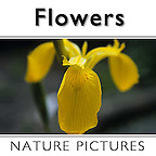 5c. Stock photos, Pictures & Images of Flowers