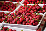 New Zealand, South Island, Marlborough, hydroponic strawberry production at Hedgerow Hydroponics. Photo #126391