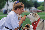 Siberian Husky Eating Ice Cream