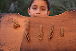"A Palestinian boy carries a honeycomb reads ""Allah"", the holy name of God, written by beeswax at a bee farm in Rafah in the southern Gaza strip, April 30, 2013. Photo by Hatem Omar"