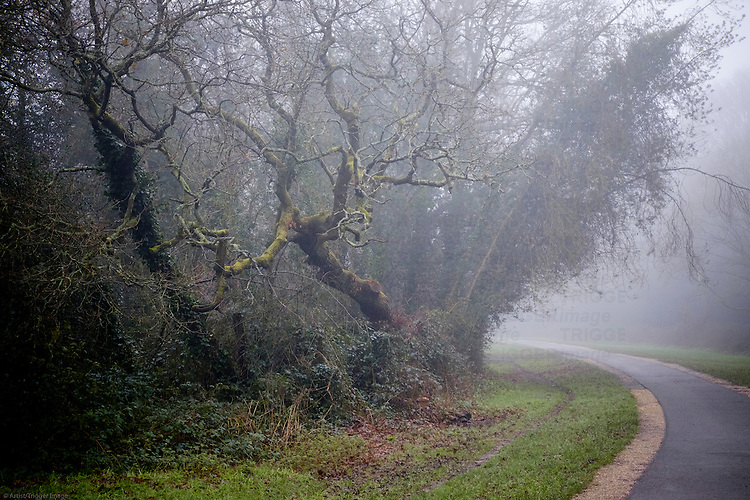 Trees in a misty park with pathway